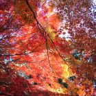 autumn leaves at Jakkoin Temple